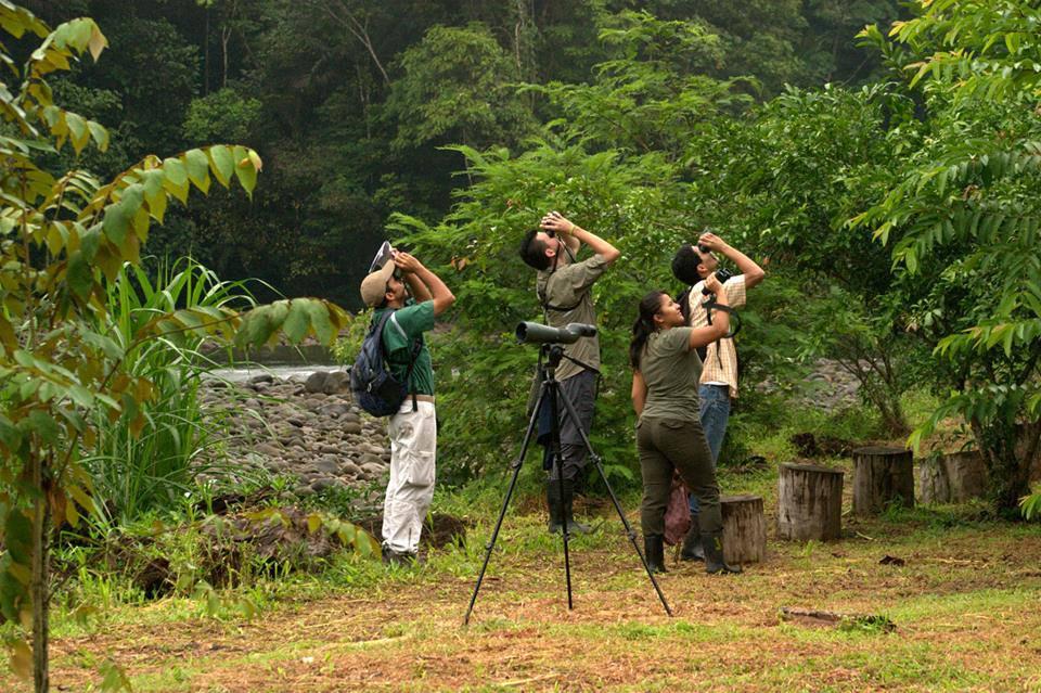 Birdwatching Selva Verde Lodge